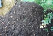 Compost Pile Curing