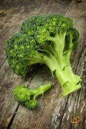 'Di Cicco' heirloom broccoli is a great choice for home gardeners because it doesn't all head up at once.