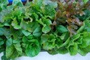 Window Box Salads 3, Source