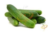 'Muncher' Slicing Cucumber