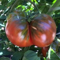 Beefsteak Tomato Varieties—'Black Krim' is a beautiful, juicy heirloom beefsteak slicing tomato that's my wife's favorite tomato