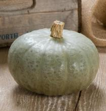 Winter Squash Varieties—'Winter Sweet' is one of the best winter squash we've tried.  Blue-grey skin, long keepers, sweet, flakey, orange flesh.
