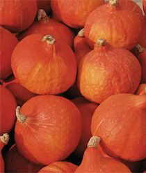 'Red Kuri' Winter Squash