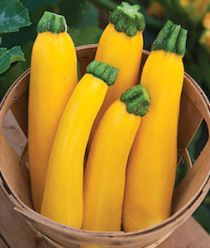 'Gourmet Gold' is a bright yellow zucchini.