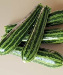 'Summer Green Tiger' zucchini have dark green skin with regular, lighter ribs for a striking slice.