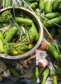 'Homemade Pickles' Pickling Cucumbers