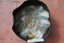Organic Soil Amendment Layer in a Smart Pot