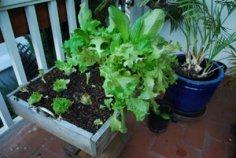 Salad Tray 07