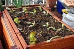 Salad Tray 03-23-10_Initital