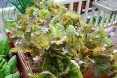 Salad Tray 05-02-10_final
