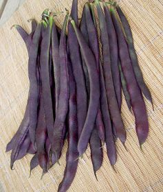 'Trionfo Violetta' Italian Heirloom Pole Bean from Burpee Seeds