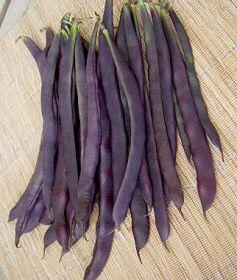 'Trionfo Violetta' Italian Heirloom Pole Bean from Burpee Seeds