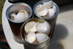 Dry Eggshells out in a Coffee Can on Top of the Fridge