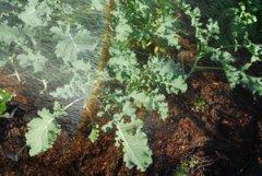 Soft, Rain-Like Spray from a Gardena Soft Spray Wand