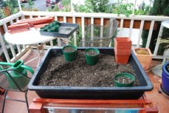 Seed Starting–Fill Pots to 1/2