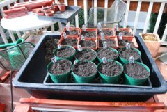 Seed Starting-Spread Sifted Potting Mix Over Seeds