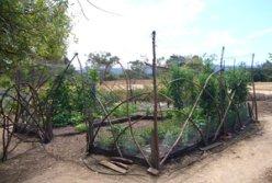 Stanford Community Farm Plot 2