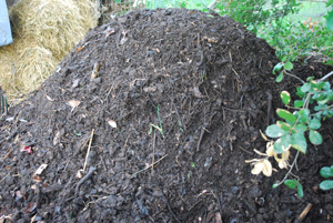 Curing Compost Pile