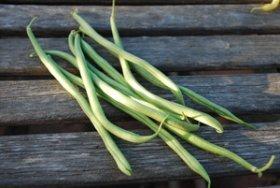 'Rolande' Bush Beans