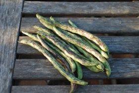 'Rattlesnake' Green Beans