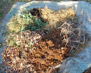 The Six Compost Food Groups: Straw, Stalks, Manure, Tree Leaves, Leafy Greens/Kitchen Scraps, and Compost Activator