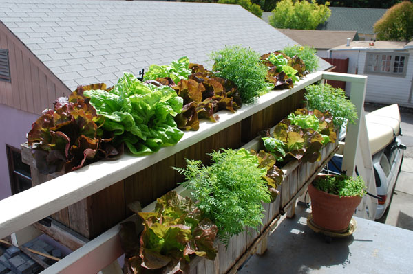 What Plants Will Grow Under A Deck : The shadow of roof falls across these planters