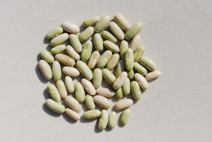 'Jade' Green Bean Seeds