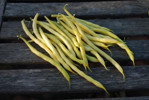 'Soliel' Bush Beans