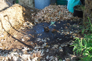Wet the Ground Down Before You Build a Compost Pile