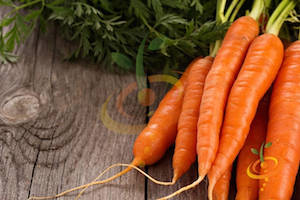 Imperator Carrot Varieties—'Autumn King'