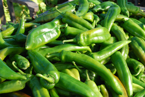 New Mexico Green Chile Harvest—52 lbs!
