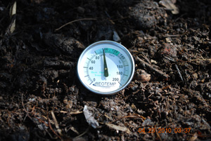 Compost Pile Temperature After Seventh Turning