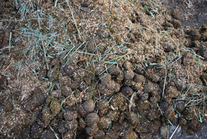 Horse Manure with Bedding