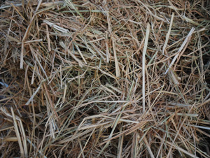 Straw Adds Cellulose to Build Compost Heat