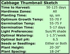 Growing Cabbage Thumbnail Sketch