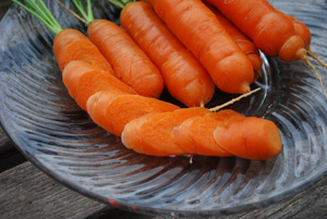 "Carrot Varieties—'Babette', a ""Mini"" Variety Suitable for Growing in Containers and Heavy or Rocky Soil"