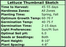 Growing Lettuce Thumbnail Sketch