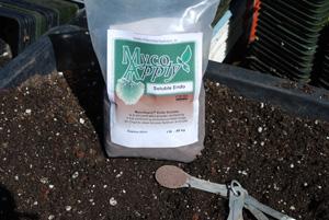 Inoculating Tomato Seedlings with Myccorhizae 1