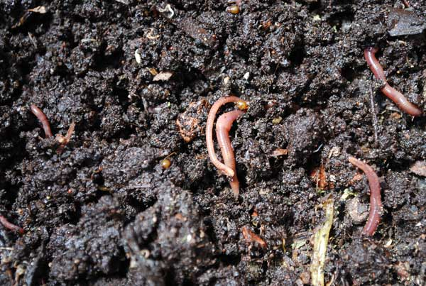 how to break down clay soil in garden