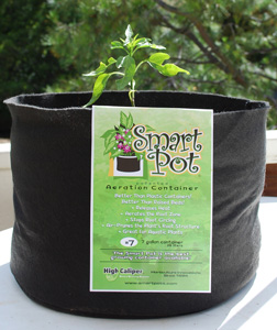 Jalapeno Planted in a Smart Pot with Organic Potting Mix
