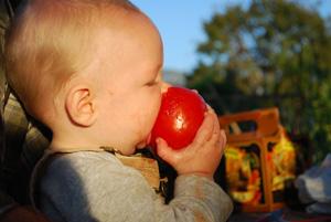 The Joy of Tomatoes!