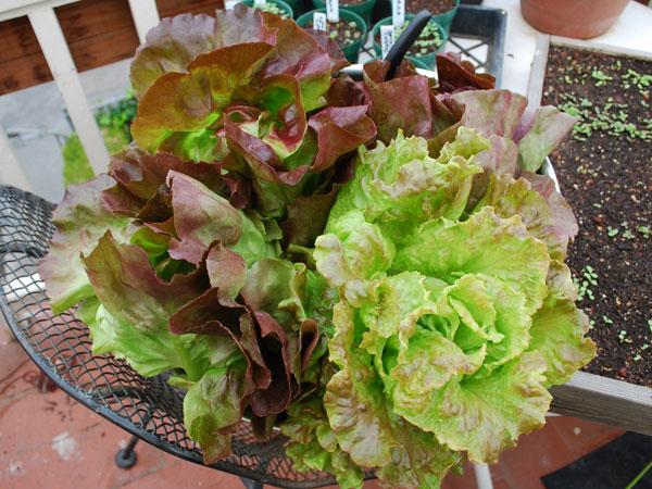 Image Result For Water Vegetable Garden Morning Or Evening