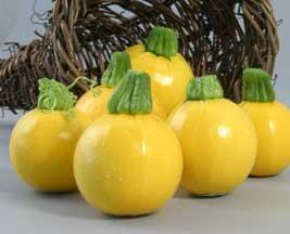 Summer Squash Varieties-'One Ball'.