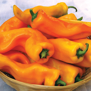'Gatherer's Gold' Italian Marconi Frying Peppers