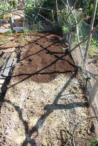 Planting Peppers—Amending Soil 1