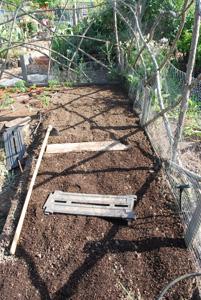 Planting Peppers—Amending Soil 2