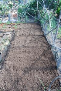 Planting Peppers—Amending Soil 3