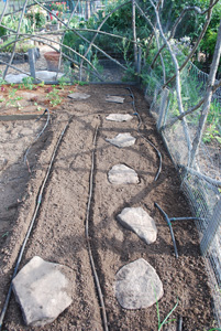 Planting Peppers—Restoring Drip Lines and Stepping Stones