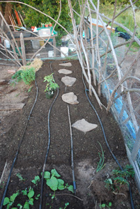 Reset Drip Irrigation Lines and Steppingstones