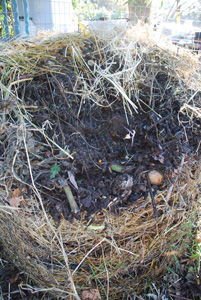 Pre-Composting in a Static Pile